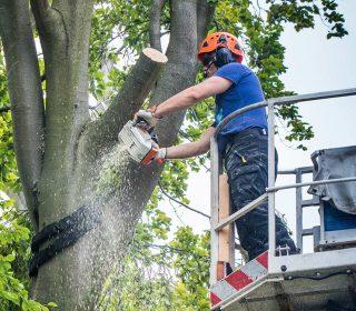 Baumpflege und -fällungen